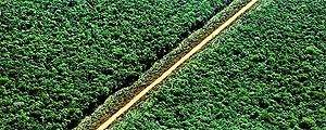 Environmental Setback in Brazil May End up Costing World US$ 5 Trillion, According to Study