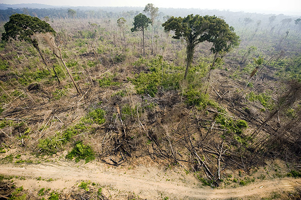 This image shows a burnt out sector of the Jamanxim National Forest at an illegal settlement, in the Amazon state of Para, nothern Brazil