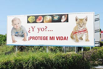 Campanha publicitria anti-aborto, capitaneada por bispos catlicos; cientistas e intelectuais assinam manifesto contra a prtica na Espanha