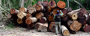 41% of Timber Exploited in Mato Grosso Is Illegal, Study Shows