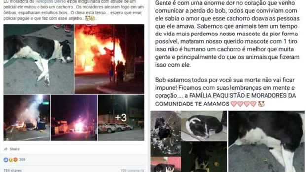 Rea��es no Facebook ap�s a morte do cachorro Bob