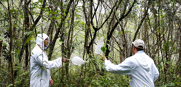 State Endemics Control health agents collect samples of mosquitoes causing yellow fever at Anhanguera park in Sao Paulo, Brazil