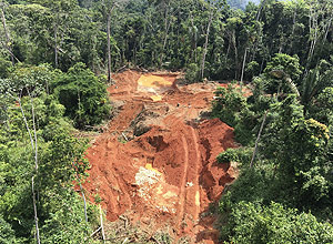Brazilian State Government Concealed Information on Illegal Logging