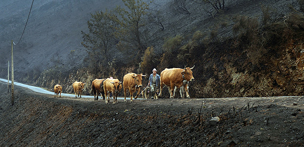 Farmers walk their livestock, on a mountain road, past vegetation, burnt by forest fire in San Martin de Cereixedo, Cervantes, Galicia, northern Spain October 17, 2017. REUTERS/Vincent West TPX IMAGES OF THE DAY ORG XMIT: VPW03