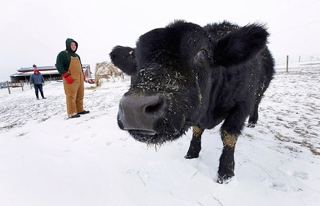 Isabella Graff, left, and her brother Zadok Graff, check on the family's beef cattle on the Bill Graff Farm, Tuesday, Jan. 7, 2014, in Middletown, Ill. Farm animals can withstand frigid outside temperatures if they're cared for properly with food, water and shelter. (AP Photo/Seth Perlman) ORG XMIT: ILSP106 - VAIVÉM DAS COMMODITIES - MAURO ZAFALON
