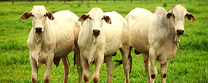 United States Removes Barriers to Brazilian Meat