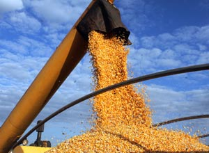 Agriculture Recovers in 2017 with a Good Harvest Forecast for Soybeans and Corn