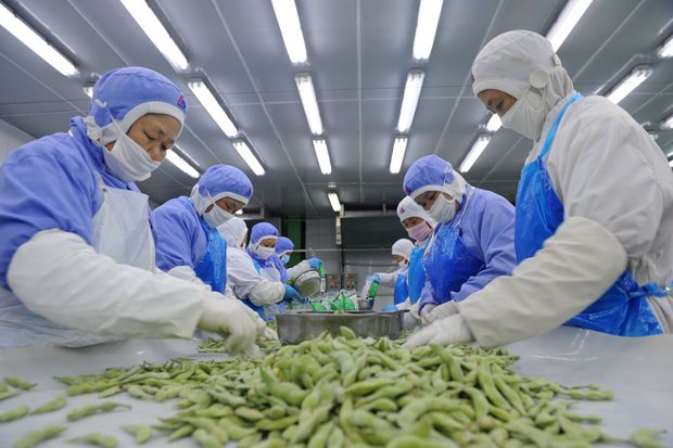 This photo taken on September 5, 2017 shows Chinese employees sorting soybeans for export in Huainan in China's eastern Anhui province. Chinese export growth slowed in August, official data showed on September 8, coming in below expectations as weak global demand weighs on the world's second largest economy. / AFP PHOTO / STR / China OUT