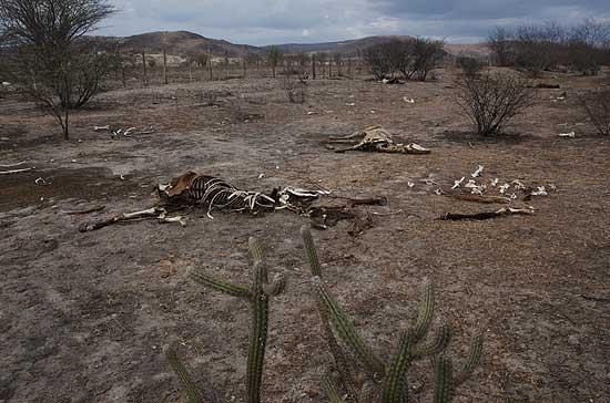 Resultado de imagem para seca na região agreste de pernambuco