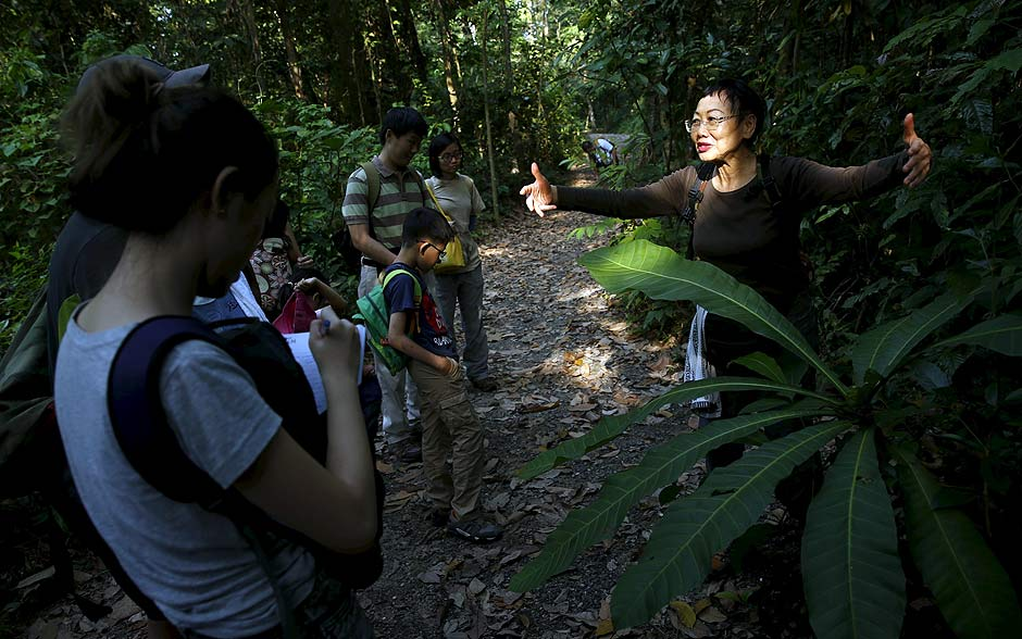 """Kok Oi Yee, 74, who works at a university's natural history museum and a volunteer nature tour guide on weekends, introduces the fauna and floral along a trail in MacRitchie Nature Reserve located at the central catchment area in Singapore March 19, 2016. Kok said """"This is something we ought to learn to treasure, we don't want to see it being lost, once its lost it will take hundreds of years before the forest regenerates."""" REUTERS/Edgar Su SEARCH """"RAINFOREST CITY"""" FOR THIS STORY. SEARCH """"THE WIDER IMAGE"""" FOR ALL STORIES ORG XMIT: PXP14"""