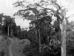 05.22.1974: A stretch of land deforested to make way for the Trans-Amazonian Highway. (Photo: Folhapress)