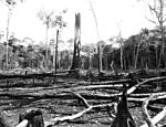 Trees burnt and chopped down for construction of the Trans-Amazonian Highway. (Photo: U. Dettmar/Folhapress).