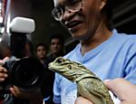 Veterinrio exibe lagarto Sailfin repatriado de Hong Kong, na China, na Cidade de Quezon, nas Filipinas
