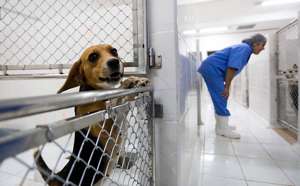 Co da raa beagle mantido em cativeiro no Instituto Royal, que usa os animais em testes de remdios Leia mais