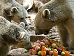Ursos ganham &quot;piquenique&quot; de frutas no zoo de Israel