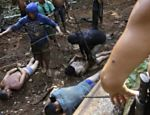 Ka'apor Indian warriors tie up loggers during a jungle expedition to search for and expel the loggers from the Alto Turiacu Indian territory, near the Centro do Guilherme municipality in the northeast of Maranhao state in the Amazon basin
