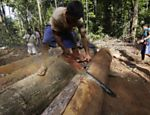 A Ka'apor Indian warrior uses a chainsaw to ruin one of the logs they found during a jungle expedition to search for and expel loggers from the Alto Turiacu Indian territory, near the Centro do Guilherme municipality in the northeast of Maranhao state in the Amazon basin