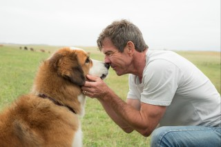 This image released by Universal Pictures shows Dennis Quaid with a dog, voiced by Josh Gad, in a scene from