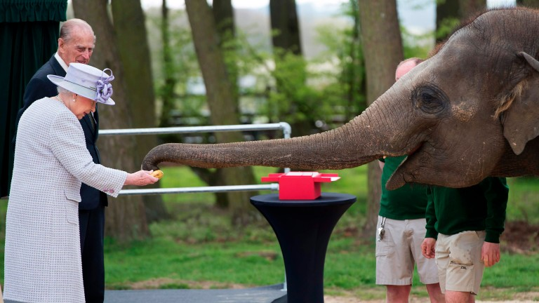 Britain's Queen Elizabeth II feeds an elephant named 'Donna' after opening the new Centre for Elephant Care at ZSL Whipsnade Zoo in Whipsnade, north of London, on April 11, 2017. / AFP PHOTO / POOL /