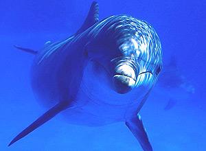 """Diretor do filme """"The Cove"""", que denuncia matança de golfinhos no Japão, se alarma com pesca ilegal deles no Brasil"""