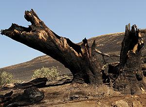 Árvore após incêndio florestal que atinge parte da Austrália, que vive uma forte onda de calor