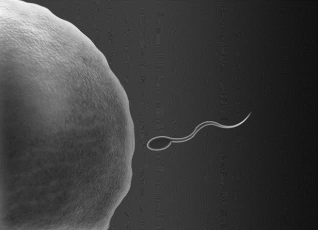 Descoberta pode fazer com que médicos passem a implantar só um embrião por vez