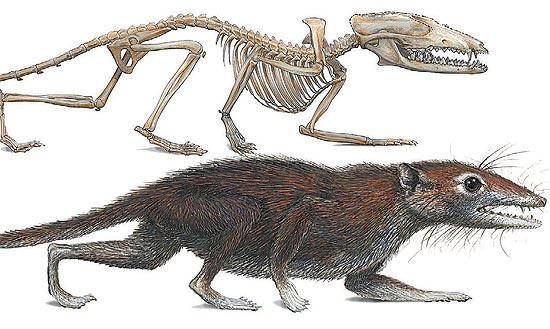 """Ilustração do esqueleto e da morfologia do """"Juramaia sinensis"""", que viveu no planeta há 160 milhões de anos"""
