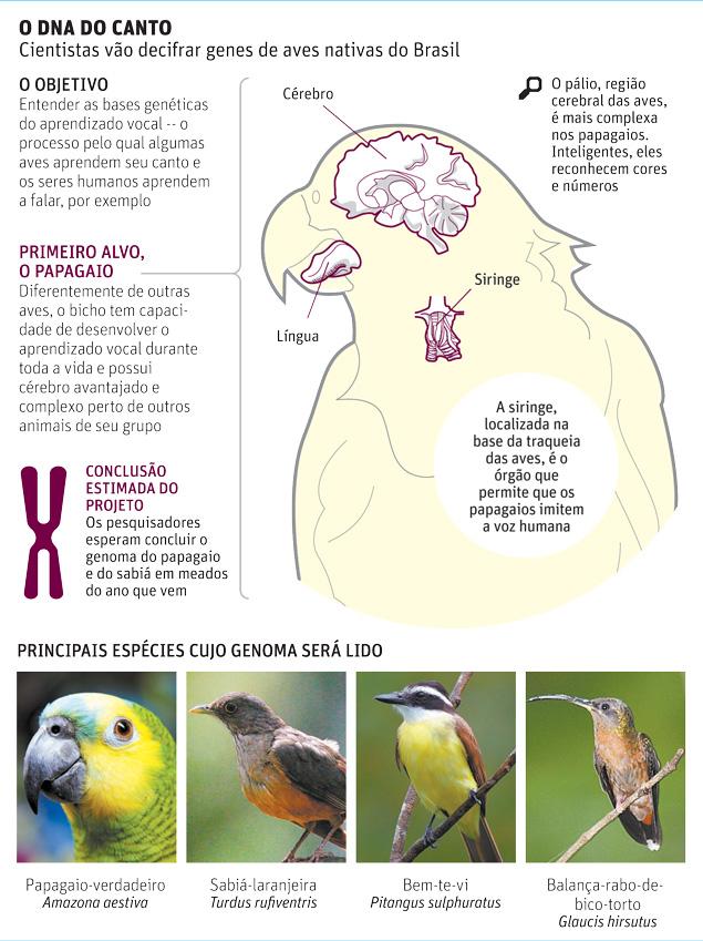Brasileiros vão decifrar genomas do papagaio e do sabiá-laranjeira ...