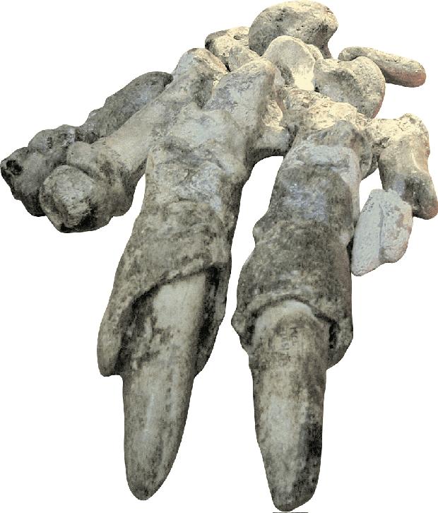 Preguiça-gigante _Catonyx cuvieri_