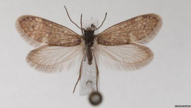 Mariposa viva: DNA delas e das borboletas são as principais bases para pesquisas