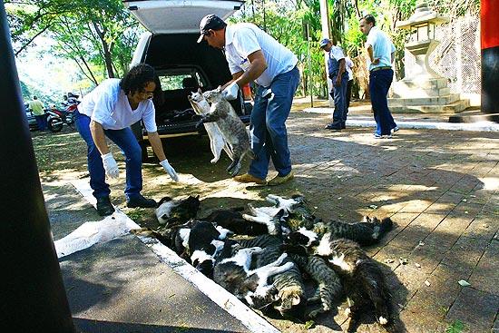 Funcionários da zoonozes recolhem 26 gatos mortos na região do Morro de São Bento, no interior de SP