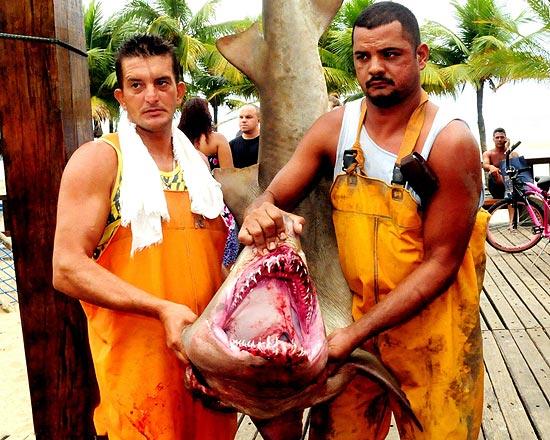 Tubarão da espécie mangona capturado no última dia 15 por pescadores em Praia Grande (SP)