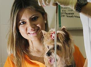 Karla Matias Francisco, 25, já congelou as células de sua yorkshire Sandy, de 15 anos