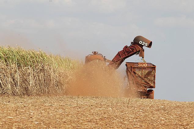 Colheitadeira em canavial de Jardinópolis; safra da cana foi afetada pela falta de chuvas