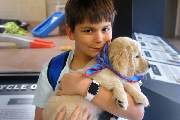 João Nicastro Silveira, 11, com um filhote de cão-guia; o menino levantou R$ 17 mil sozinho para a viagem