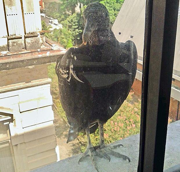 Alunos fecham as janelas para evitar a entradas de urubus