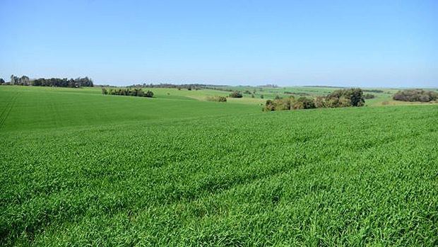A agricultura é uma das atividades mais importantes para a economia do noroeste gaúcho