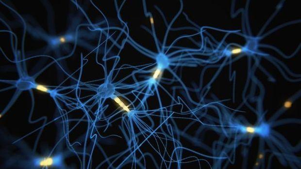 Áreas do cérebro dedicadas à aprendizagem têm conexões mais fracas em casos de estresse tóxico