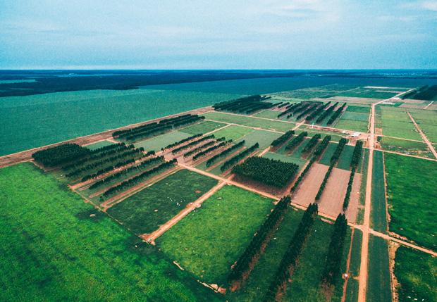 Sinop, MT, Brasil, 06-12-2017: Área de experimentos de ILPF (integração lavoura-pecuária-floresta) na Embrapa. Rodovia dos Pioneiros MT-222, Km 2,5, Zona Rural. (foto Gabriel Cabral/Folhapress)