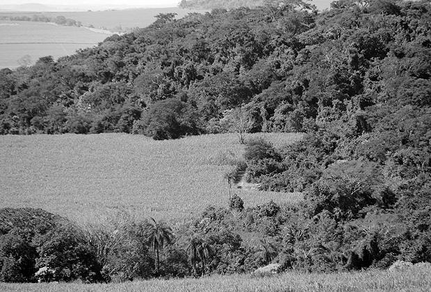 Reserva legal em fazenda formada antes da aprovação do Código Florestal
