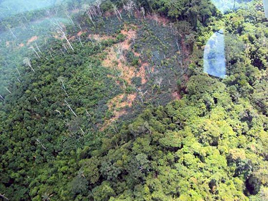 ONG Survival International divulgou fotos aéreas de uma tribo isolada de índios Yanomami, em Roraima