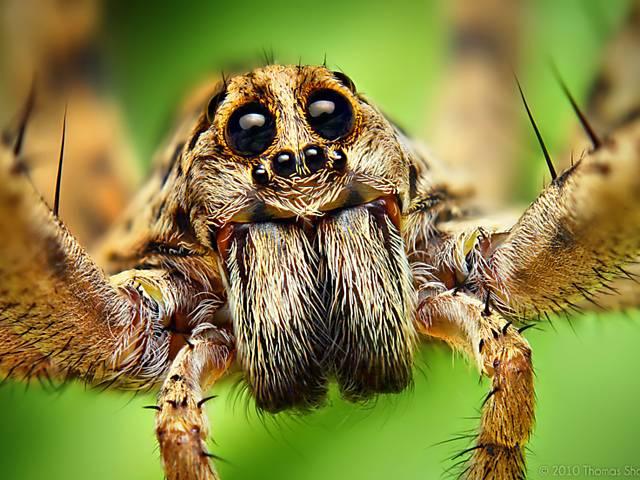 Explosão de cores em detalhes de aranhas e moscas