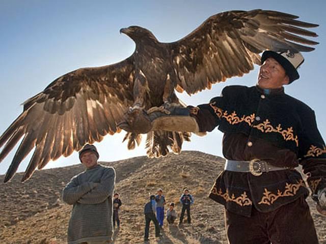 Veja imagens de caçada com águia-dourada
