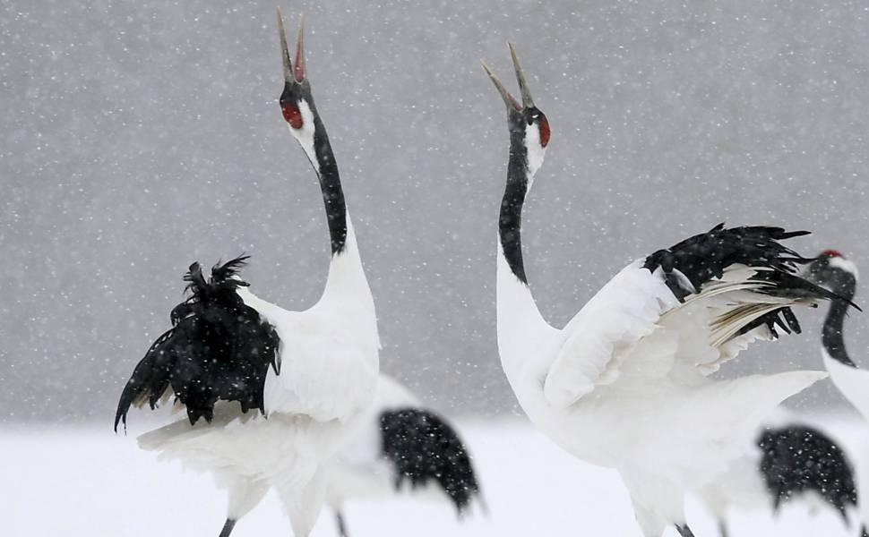 Animais em regiões geladas do Japão