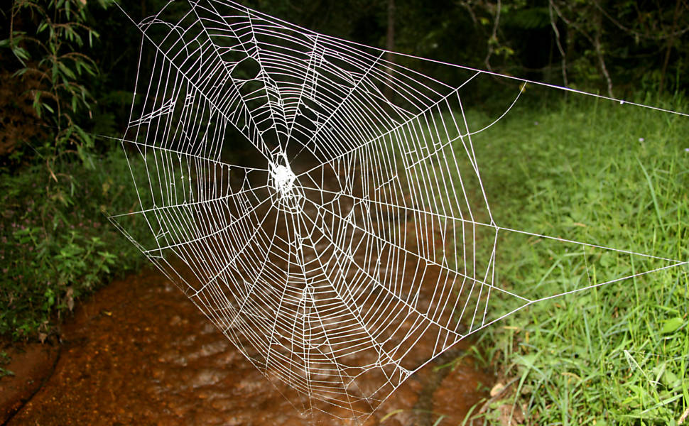 Fungo brasileiro está entre as espécies mais significativas de 2010