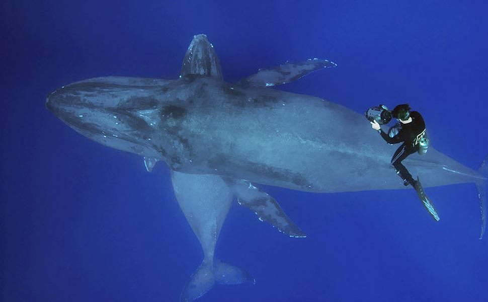 Fotógrafo lança livro com imagens de baleias