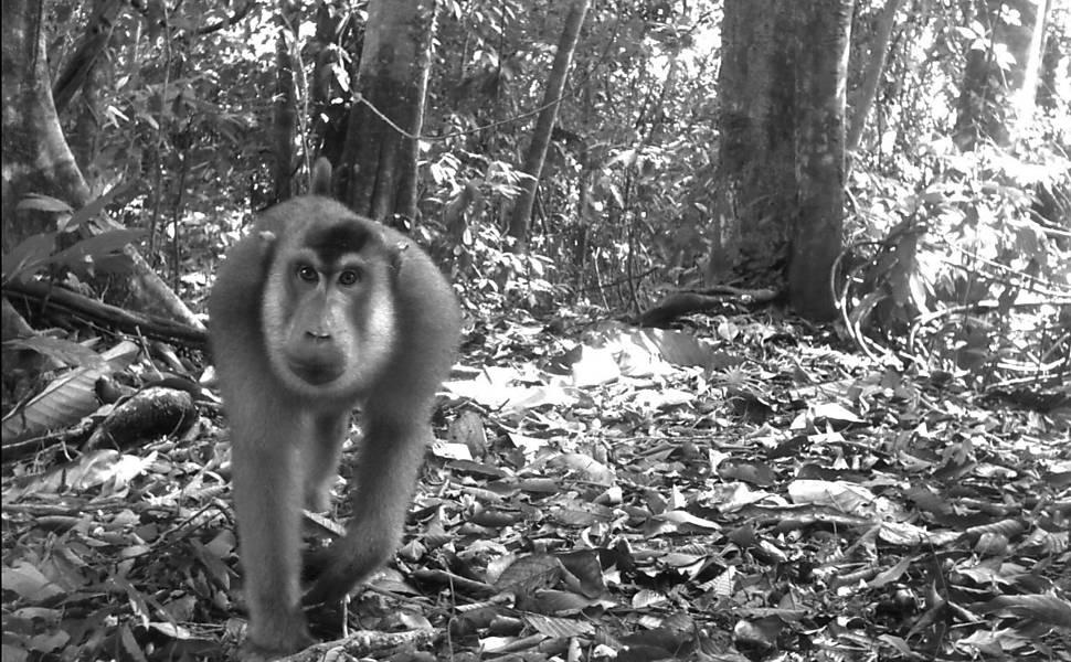 Câmeras escondidas mostram a vida selvagem