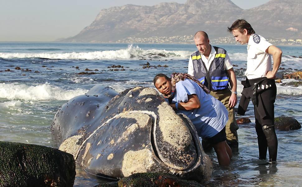 Baleia-franca-austral encalha e morre na África do Sul
