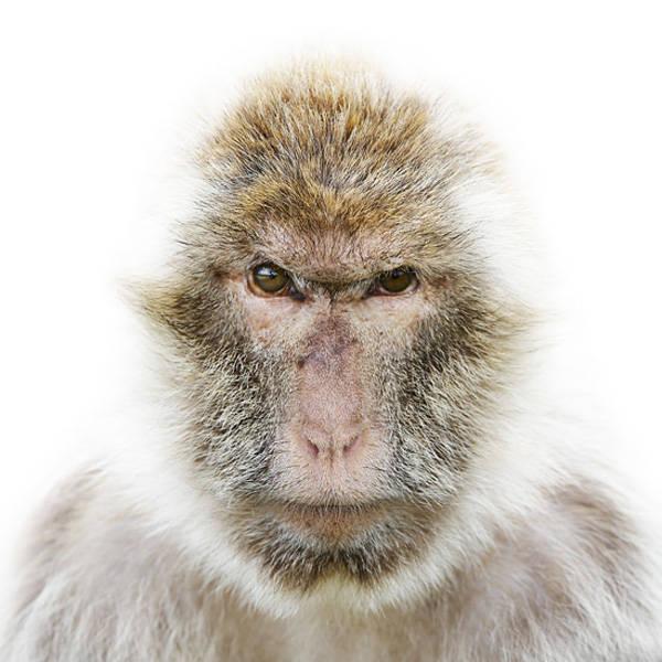 Fotos revelam personalidade de animais selvagens; veja