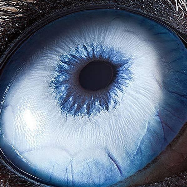 Fotógrafo registra close-ups de olhos de animais